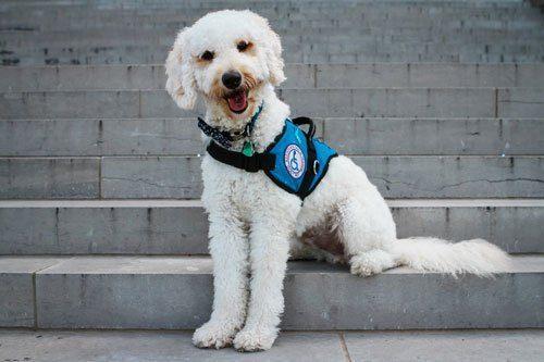 EOD Warrior Foundation Assistance Dog niceville fl