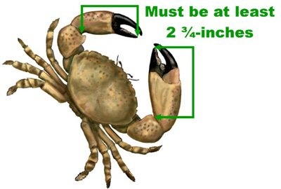 SaltMeasureStoneCrab.jpg