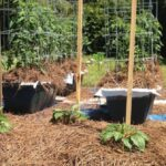 April is vegetable planting time | FRONT-YARD FARMER