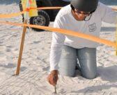 Turtle patrol missions sustain sea life