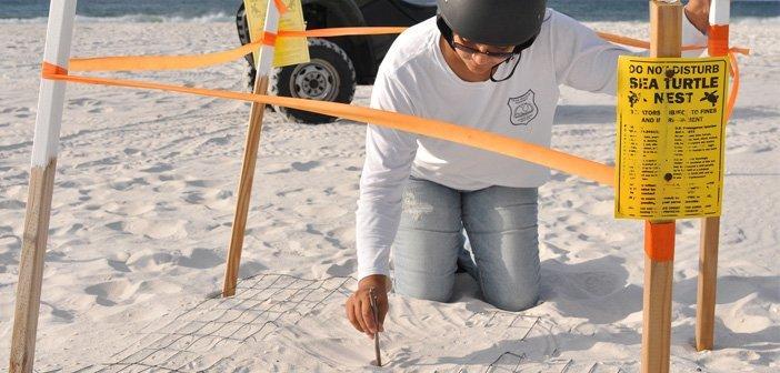 Eglin Air Force Base Turtle Patrol, Niceville FL