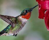 Hummingbirds program at Niceville Library