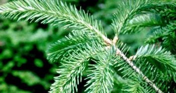 Christmas Tree Guide, Niceville FL