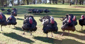 heritage turkey, niceville fl