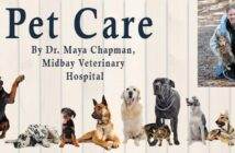 Pet Care Niceville Fla