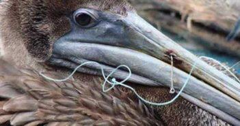 fih hook pelican niceville fl