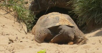 gopher tortoise niceville fl