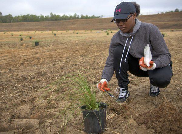 niceville eafb tree planting