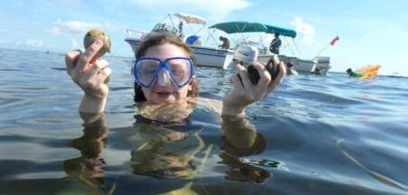 scallops northwest florida