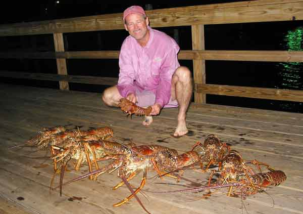 florida spiny lobster catch