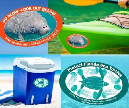florida manatee and sea turtle decals
