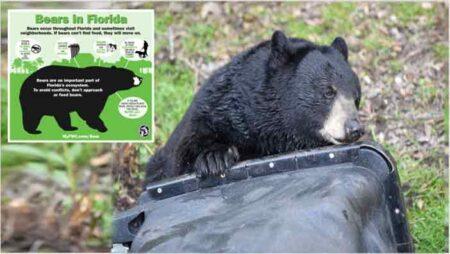 florida bear safety tips